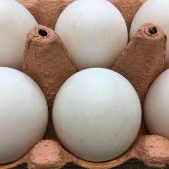 Box of Duck Eggs